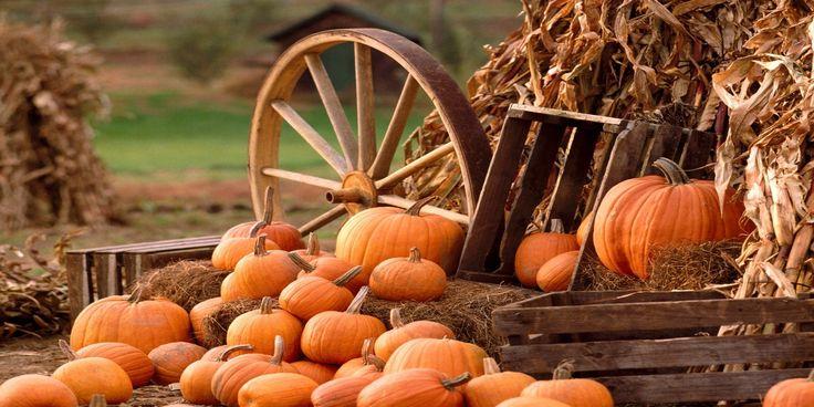 A cute pumpkin backdrop looks great in any photo.