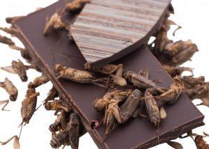 cricket bark with roasted crickets