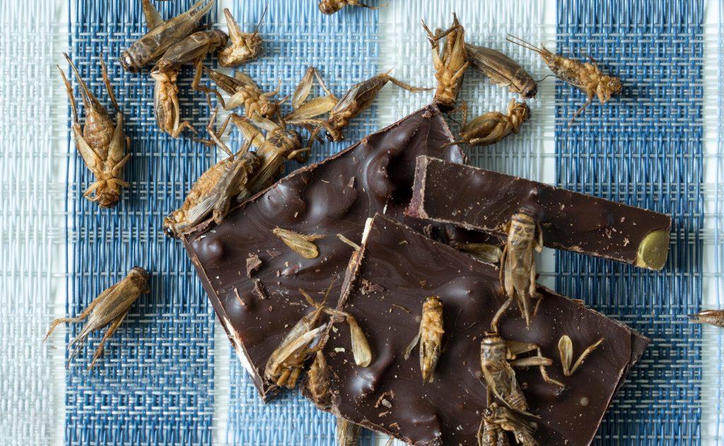 Delysia Chocolatier Cricket bark